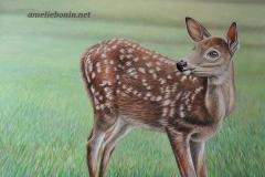 Jeune cerf de Virginie (Bambi)